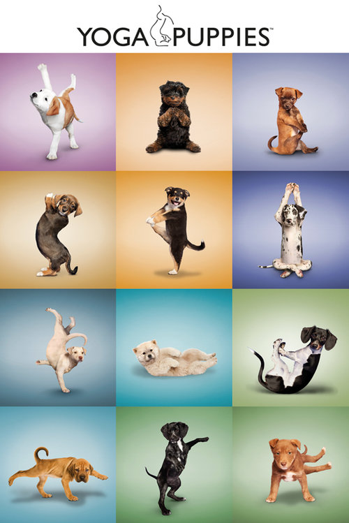 Yoga Puppies Grid Maxi Poster