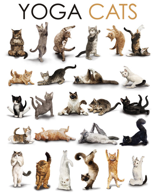 Yoga Cats Compilation Maxi Poster