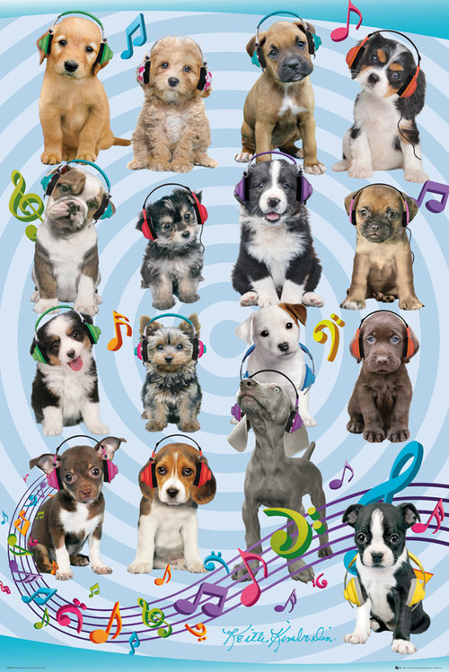 Keith Kimberlin Puppies Headphones 2 Maxi Poster